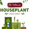 Thumbnail image for The Ultimate Houseplant Cheat Sheet